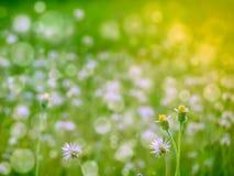 dwa traw kwiatu śnieg spada w wiośnie Zdjęcia Stock