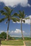 dwa tropikalny drzewko palmowe Zdjęcie Stock