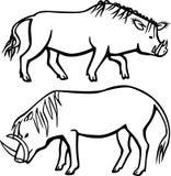 Dwa warthogs Obraz Royalty Free