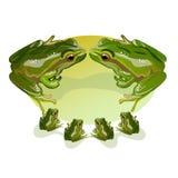 Dwa wielka zielona żaba z cztery EPS 10 małą ilustracją Zdjęcia Stock