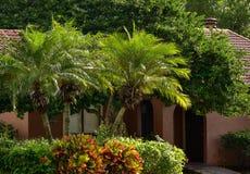 Dwa wielkiego croton drzewka palmowego blisko domu i krzaki obrazy stock