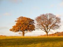 Dwa wielkiego drzewa opróżniają trawa kraju drzew niebieskiego nieba gruntowe chmury l Zdjęcia Royalty Free