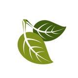 Dwa wiosna liścia ikony, natury i ogrodnictwa prosty, temat Zdjęcie Royalty Free
