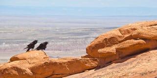 Dwa wrony przy łuku parkiem narodowym, UT Obraz Royalty Free