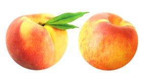 Dwa wyśmienicie świeża brzoskwinia Zdjęcie Royalty Free