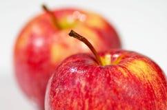 Dwa wyśmienicie jabłka Obraz Stock
