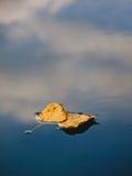 Dwa wysuszony liść w wodzie Zdjęcia Stock