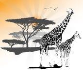 Dwa żyrafy Ilustracja Wektor