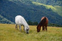 Dwa żywieniowego konia w górach Zdjęcie Royalty Free