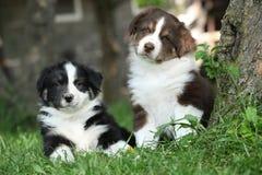 Dwa zadziwiającego szczeniaka kłama wpólnie w trawie Fotografia Royalty Free