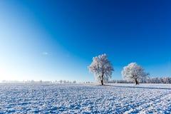 Dwa zamarzniętego drzewa po środku pola zakrywającego śniegiem Obraz Royalty Free