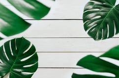 Dwa zielonego monstera liści tropikalna rama zdjęcia royalty free