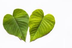 Dwa Zielonego serca w Białym tle fotografia stock