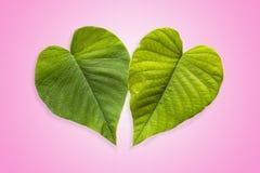 Dwa Zielonego serca w Gradated i Textured Różowym tle zdjęcie royalty free