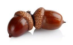 Dwa związanego acorns odizolowywającego na białym tle Obrazy Stock