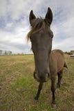 Dwaas Paard Stock Foto's
