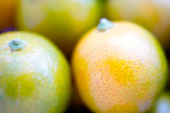 Dwarf Calamondin Fruit Macro Stock Photo