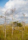 Dwarf Cypress Trees stock photo