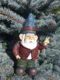 Funny  dwarf in front of a coniferous tree Royalty Free Stock Image