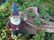Dwarf in front of  wooden root Stock Images
