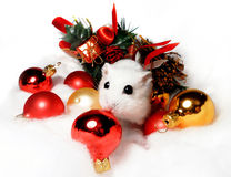 Dwarf hamster with Christmas decorations Stock Photos