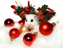 Dwarf hamster among Christmas decorations stock image