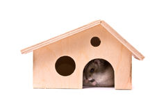 Dwarf hamster in house Royalty Free Stock Photography