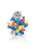 Dwarf hamster on toy white background Royalty Free Stock Image