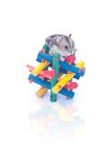 Dwarf hamster on toy white background. Dwarf funny hamster sitting on white background Royalty Free Stock Photography
