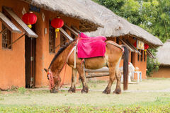 Dwarf horse. The dwarf horse at pai amphur Mahongson province in thailand Stock Photos