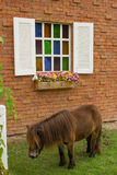 Dwarf horse standing. Beside a wall Royalty Free Stock Photo