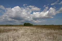 Dwarf Mangrove Trees of Everglades National Park. The Dwarf Mangrove Trees of Everglades National Park, Florida, in extreme drought conditions royalty free stock images