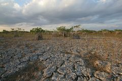 Dwarf Mangrove Trees of Everglades National Park, Florida. Dwarf Mangroves Trees of Everglades National Park, Florida, under drought conditions stock photography