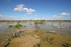 Dwarf Mangrove Trees of Everglades National Park, Florida. royalty free stock photo
