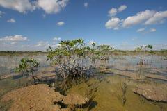 Dwarf Mangrove Trees of Everglades National Park, Florida. stock photos