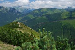 Dwarf mountain pine. In the foreground a dwarf mountain pine grows. Peaks of the Tatra mountains are in a background Royalty Free Stock Photos
