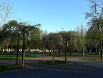 Dwarf decorative trees in the park stock photos
