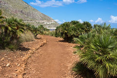 Dwarf palms along path in the Zingaro Nature Reserve - Trapani Stock Images