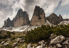 Dwarf pine growing at Drei Zinnen peaks in Dolomites Royalty Free Stock Photo