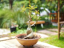 Dwarf plant in garden royalty free stock photo