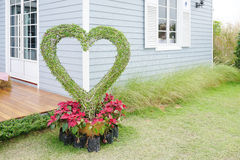 Dwarf plants in heart shape Stock Image