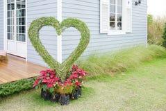 Dwarf plants in heart shape Stock Image