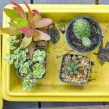 Dwarf plants Royalty Free Stock Photo