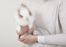 Dwarf rabbit on the arm Royalty Free Stock Photography