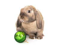 Dwarf rabbit with a Christmas toy. Royalty Free Stock Photography