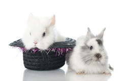Dwarf rabbits Stock Photography