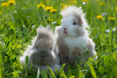 Dwarf rabbits. In a spring meadow royalty free stock images