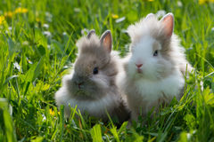 Dwarf rabbits. In a spring meadow Stock Image