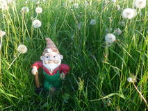 Dwarf with shovel on a meadow full of dandelions Royalty Free Stock Images