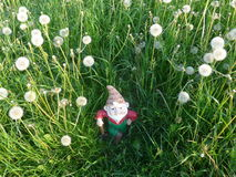 Dwarf with shovel on a meadow full of dandelions Stock Photos